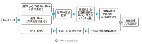 转录组测序应用—基因表达水平研究