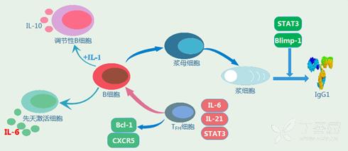 仹il�b>K�_白介素il-6在疾病研究方面的研究概述