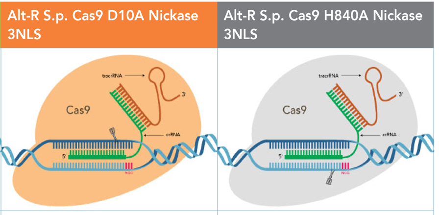 Alt-R™ CRISPR-Cas9 Nickase