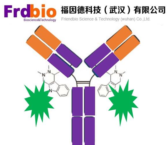 荧光抗体标记服务