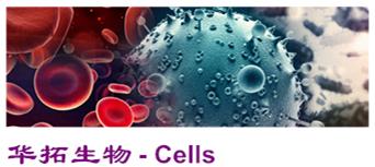 ATCC DSMZ 中国科学院细胞现货供应!保质保售后!