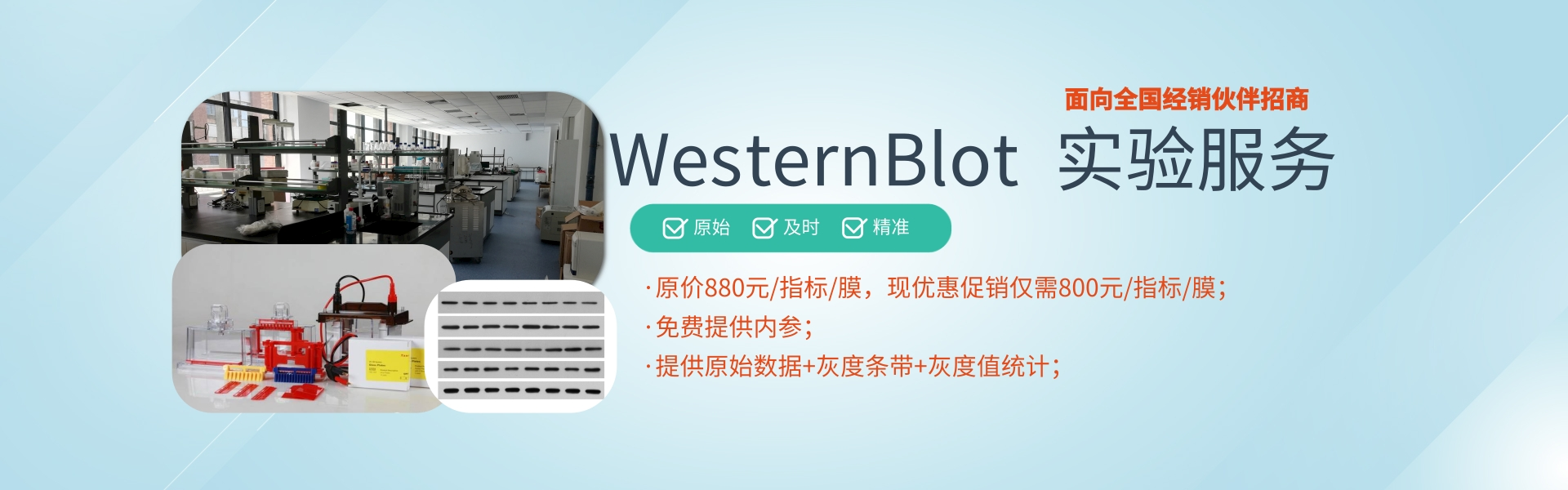 WB(普通蛋白) 检测