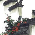 yunzaiguoguang