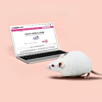 基因敲除小鼠