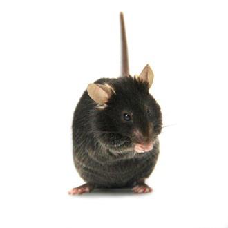小鼠胚胎冻存、精子冻存服务