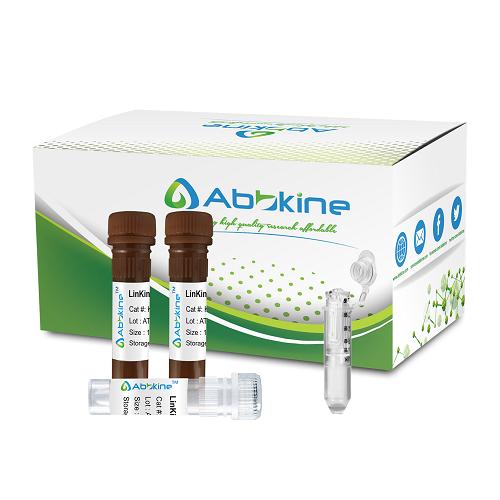 CheKine™ 过氧化氢酶 (CAT) 活性分析试剂盒