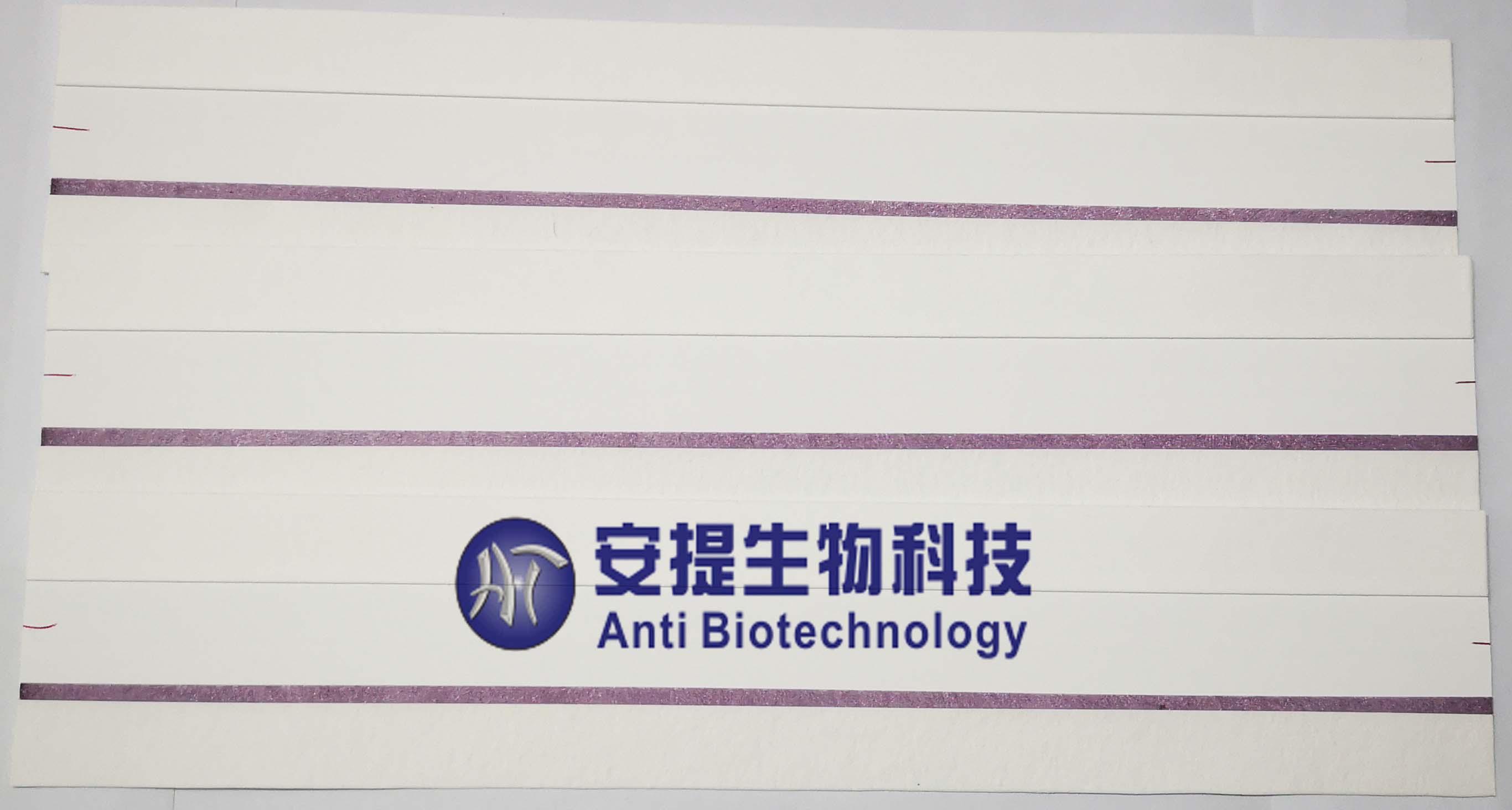 乙型流感检测卡 乙型流感试纸 乙型流感半成品 乙型流感胶体金大板