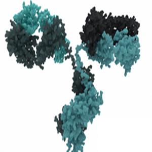 CABYR antibody
