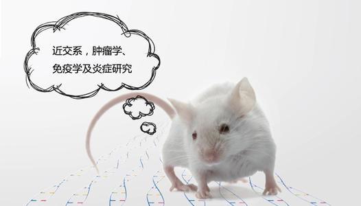 小鼠PDX模型