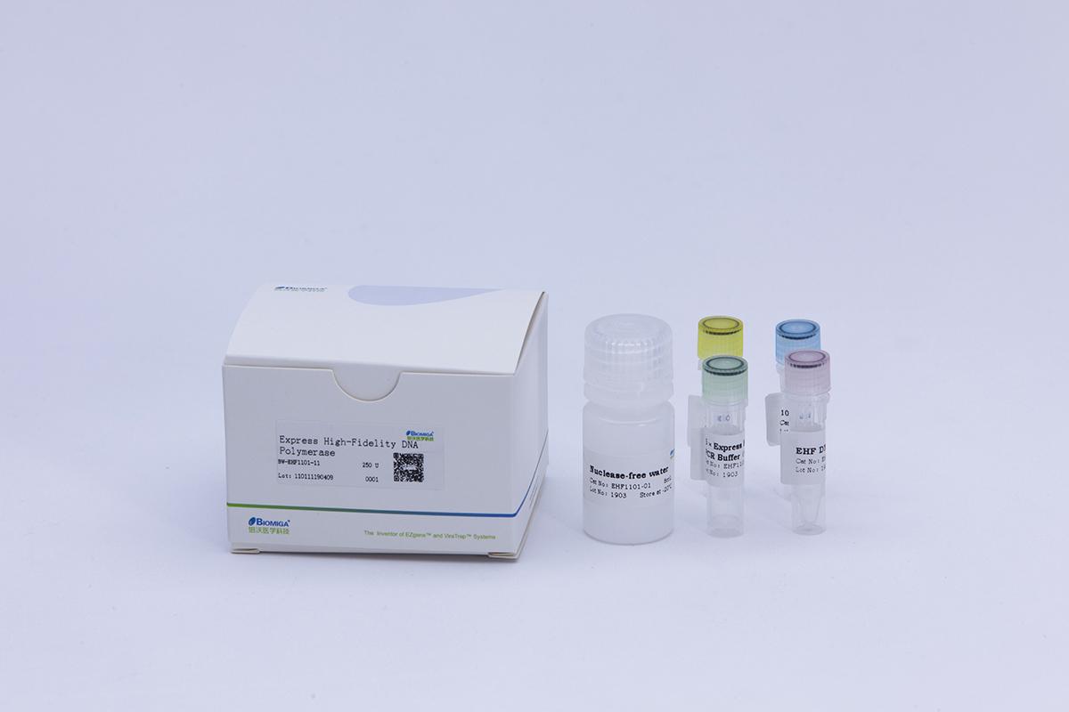 Express High Fidelity DNA Polymerase(含dNTPS)