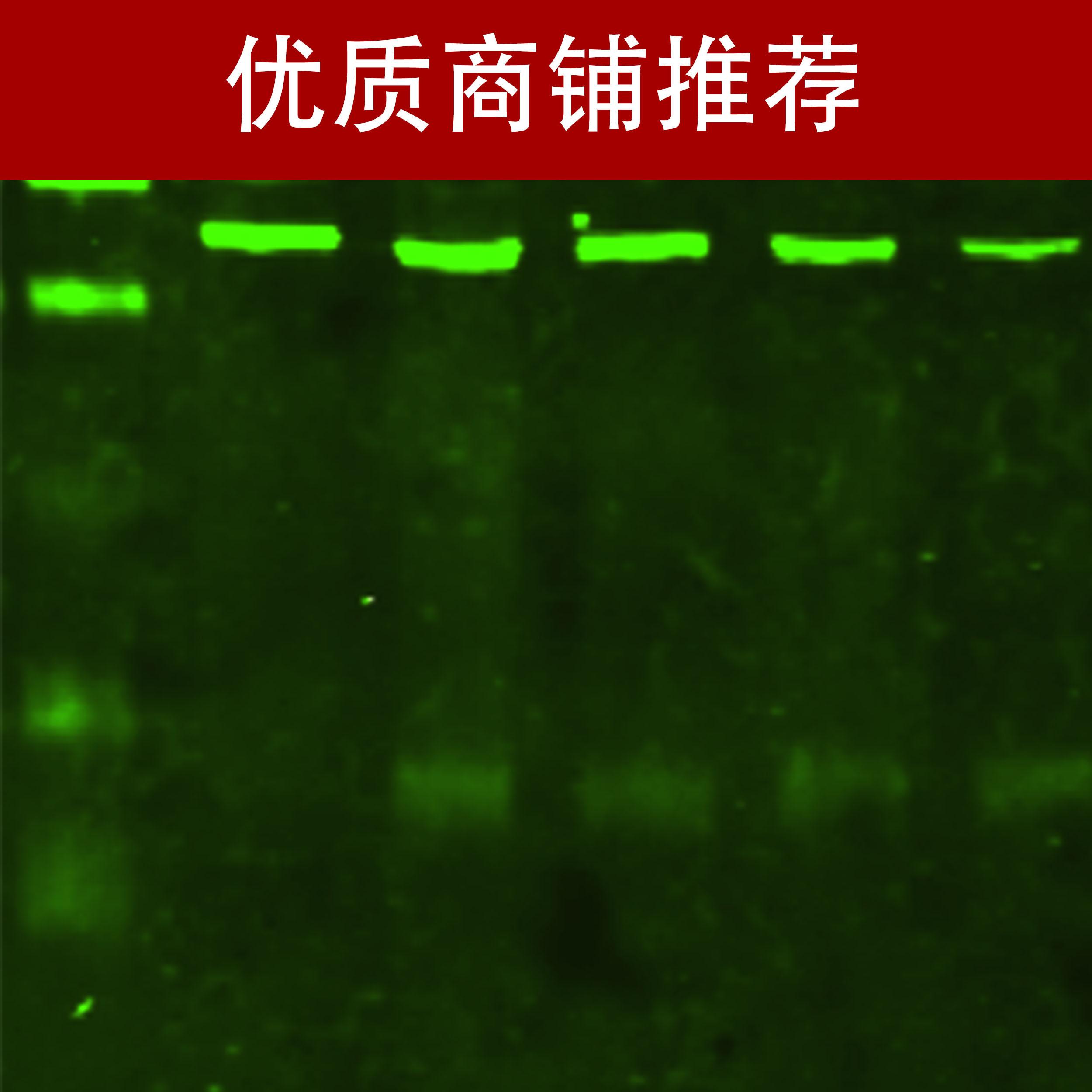 荧光western blot检测(你还在做普通WB,已经out了)