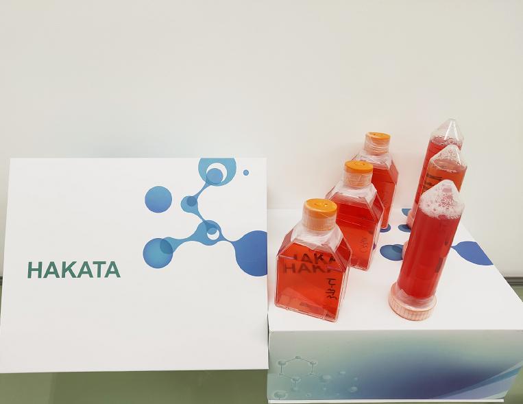 sk-mel-28细胞人皮肤恶性黑色素瘤