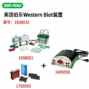 价格1.4w伯乐Bio-Rad小型垂直电泳转印系统套装(电泳槽+转印芯+基础电源)1658033总代理