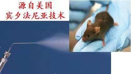 大小鼠气管内给药套装/Model DP-4 insufflator