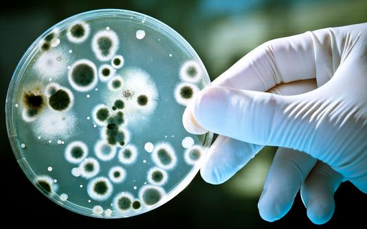 巴氏芽孢杆菌