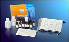 PIINP试剂盒