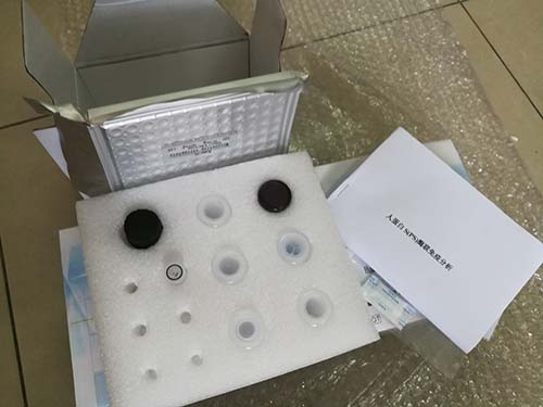 PICOGREEN细胞繁殖定量检测试剂盒