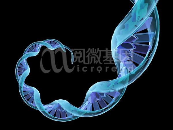 LncRNA检测服务