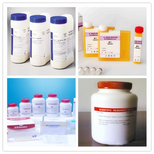 cAMP 环磷酸腺苷