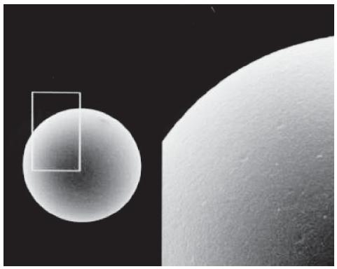 Titansphere TiO二氧化钛填料 蛋白翻译后修饰 磷酸化肽富集