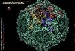 关节痛诊疗的陷阱:细小病毒 B19 感染