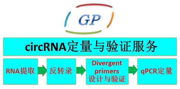 circ(环状)RNA荧光定量PCR