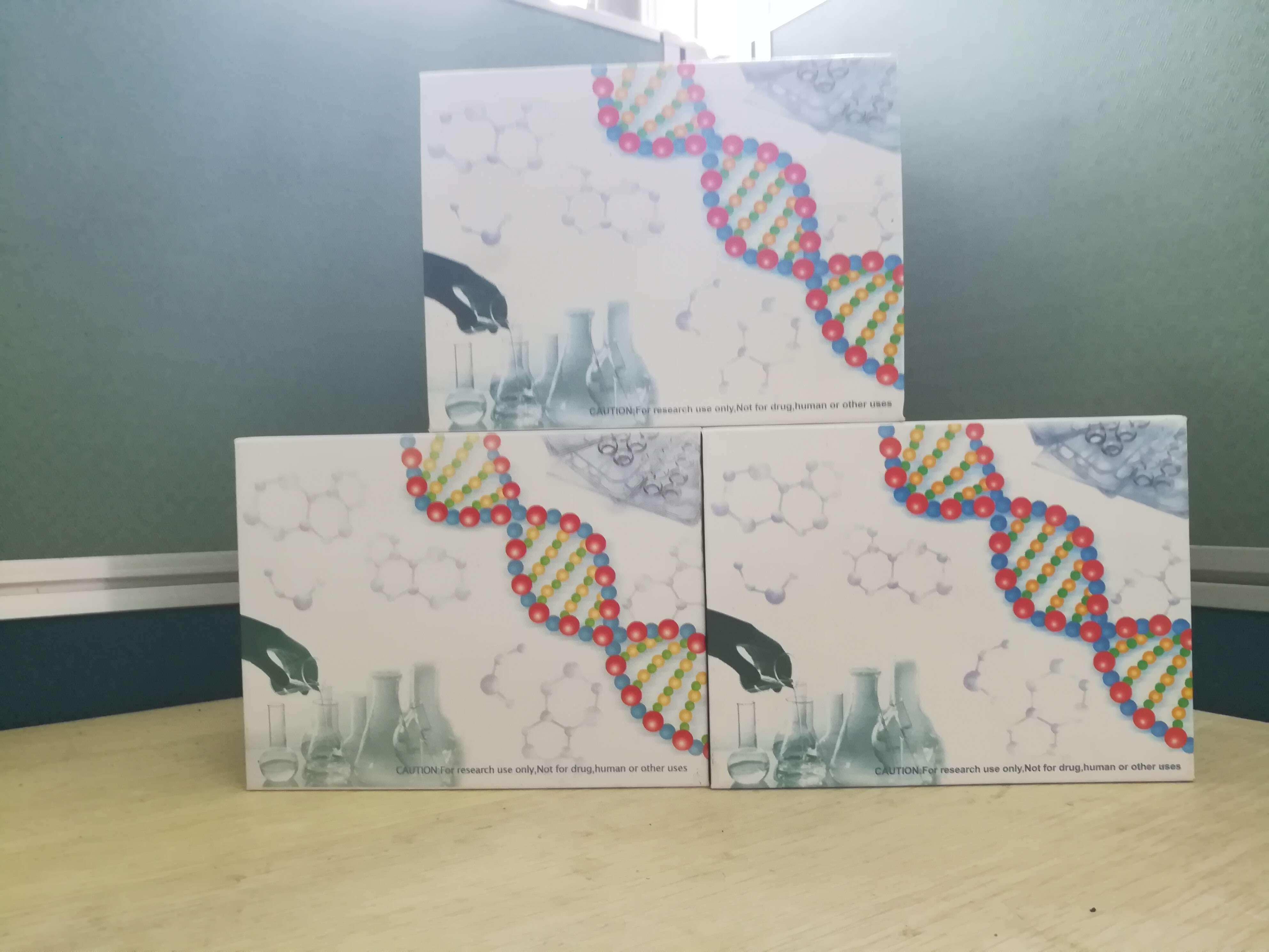 人gp130酶联免疫检测试剂盒