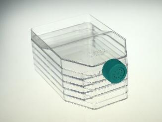 NEST 五层细胞培养瓶 透气盖 TC 731002