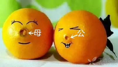 脐橙公母-有字.jpg