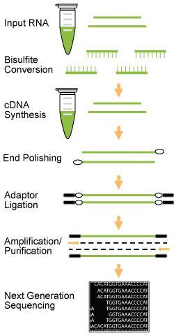 m5C RNA甲基化测序