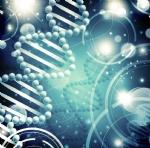 分子克隆与质粒载体构建