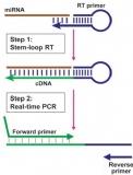 反转录PCR
