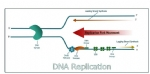 PCR引物设计