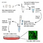原代细胞分离与培养