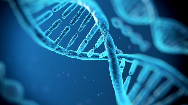基因分析及获取服务