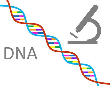 PCR +测序 SNP分型技术服务