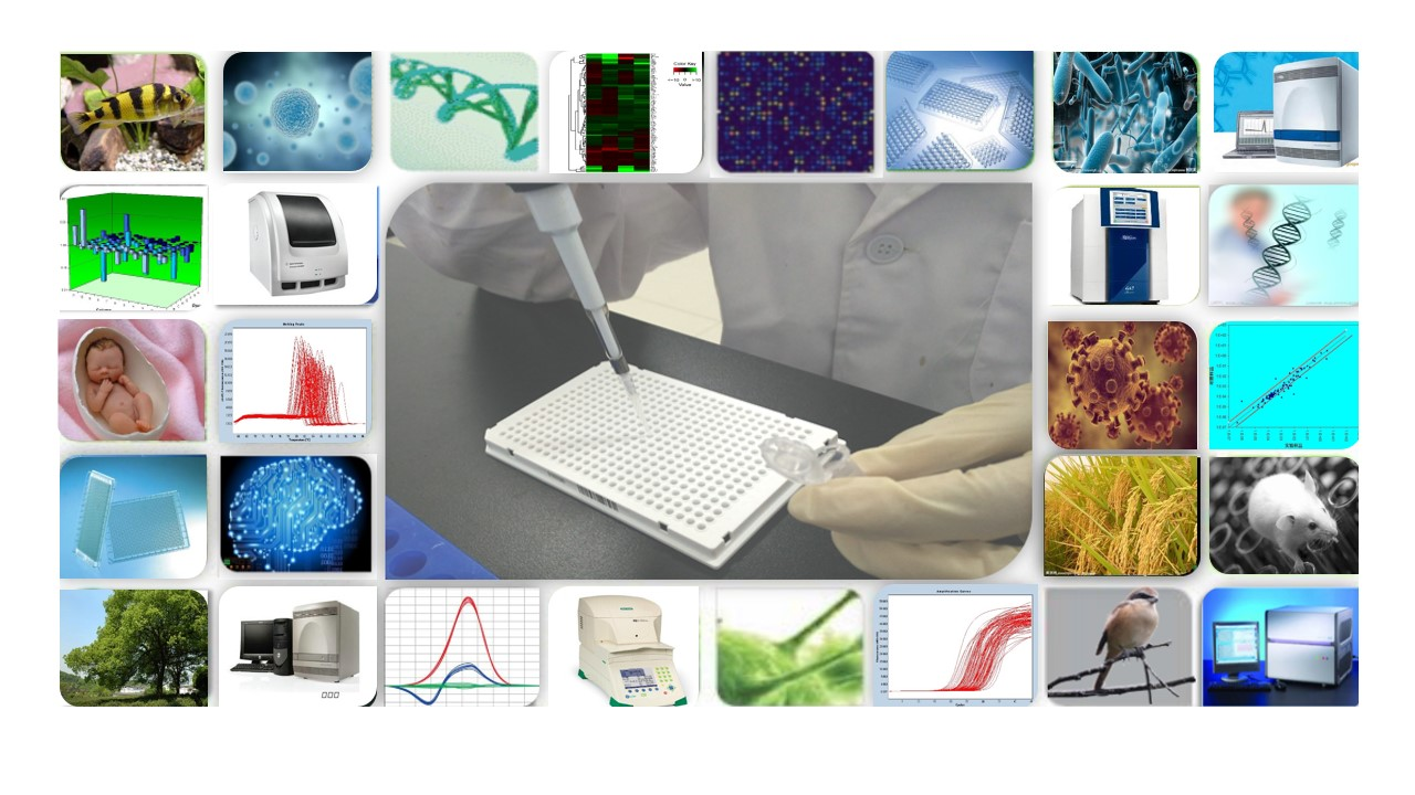 microRNA PCR芯片(PCR Array)