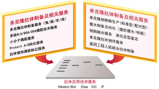 抗体纯化及修饰技术服务