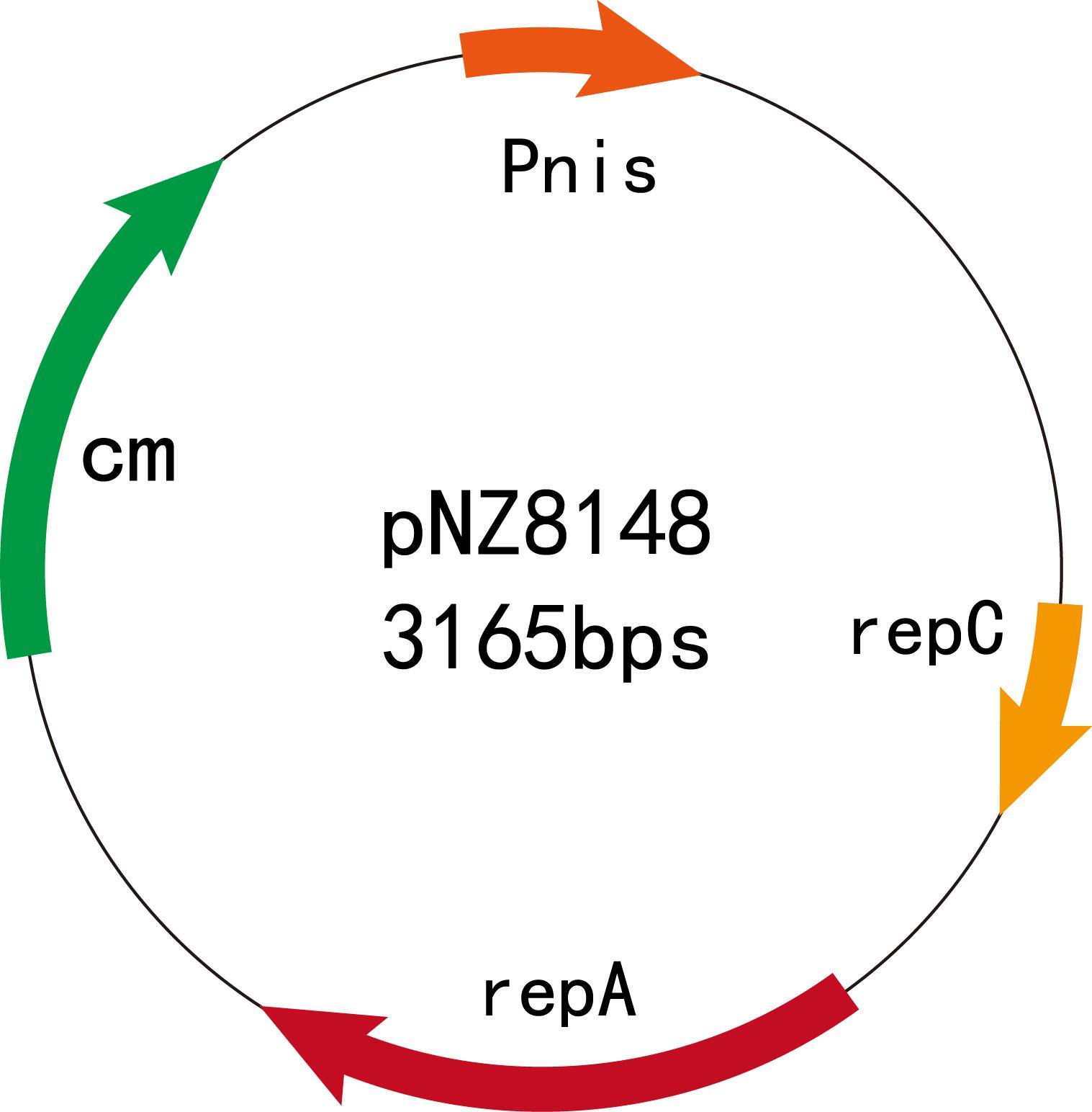 原核蛋白表达纯化服务(乳酸菌体系)