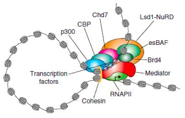 超级增强子鉴定服务--组蛋白修饰chip测序