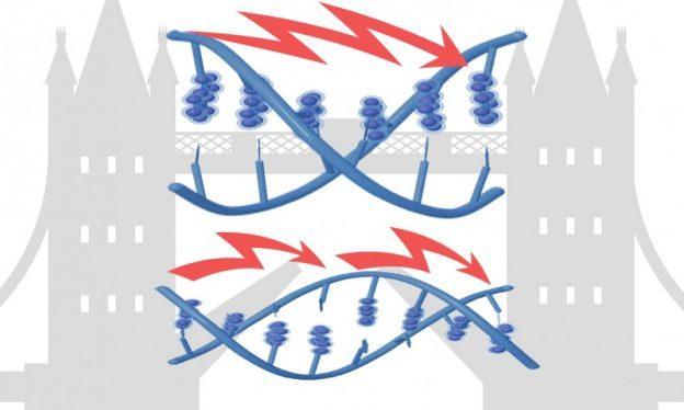 MicroRNA inhibitors /miRNA inhibitors / 化学合成miRNA