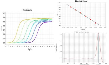 lncRNA实时定量PCR检测/LncRNA RT-PCR