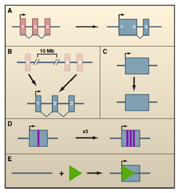 LncRNA研究思路