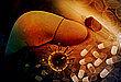 两款新型肝癌药物获得 FDA 孤儿药认证