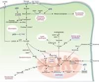 代谢流组学(Metabolic Flux Analysis)检测分析