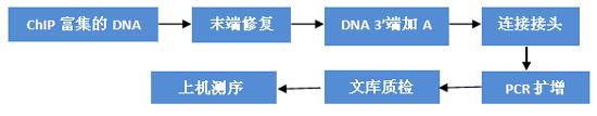 染色质免疫共沉淀-测序服务
