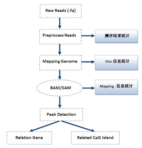 甲基化DNA 免疫共沉淀测序(MeDIP-Seq)服务
