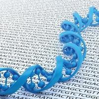 伯豪生物非编码RNA研究总体解决方案