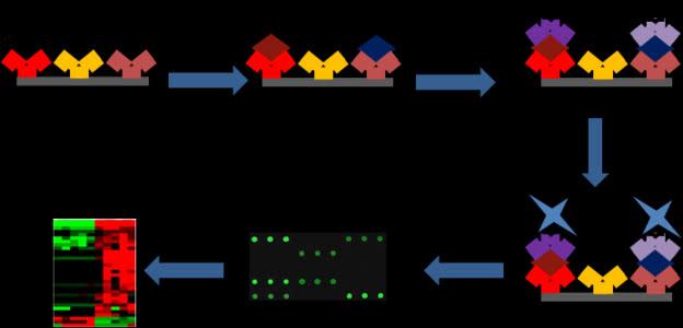 蛋白芯片技术服务