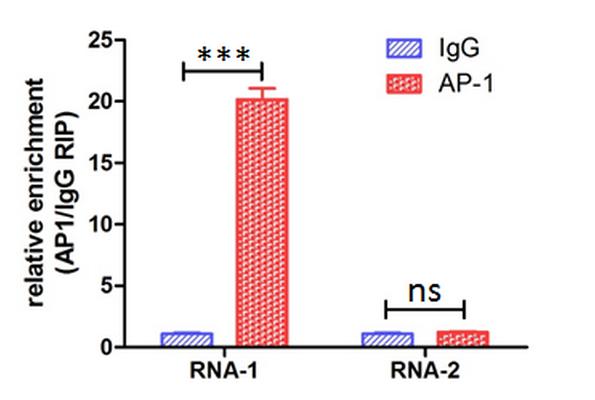 LncRNA功能机制研究